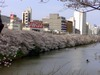 20080329ohori_3